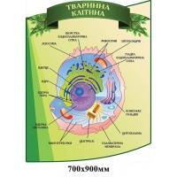 Стенд Животная клетка зеленый