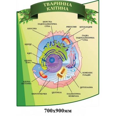 Стенд Тваринна клітина зелений