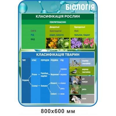 Стенд Классификация растений (голубой)