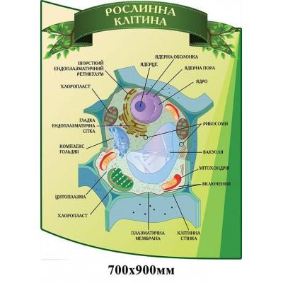 Стенд Ролинна клітина зелений