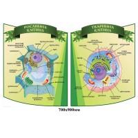 Комплект стендів для кабінету біології зелений